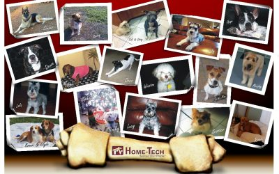 Throw ARC a Wishbone. The ARC Starlight Auction Helps Animals in Need