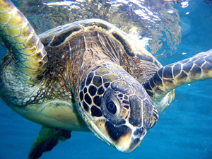 Lots to Learn from Turtles – Celebrate World Turtle Day